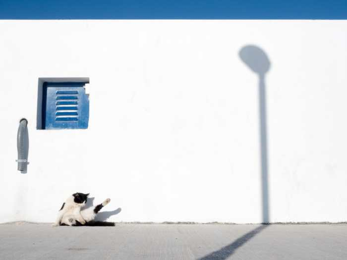 """Animals"" Street Photograph by Achim Katzberg"