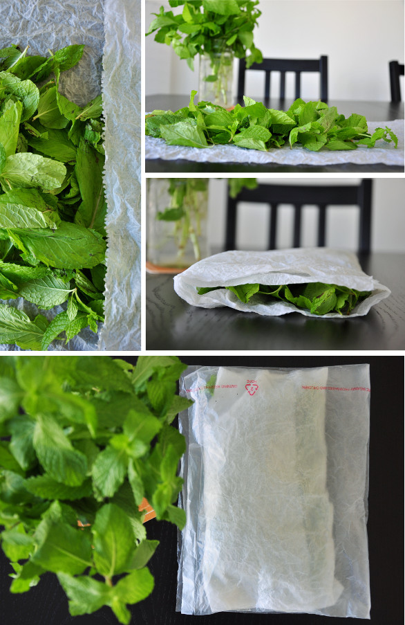 How To Store Fresh Mint Method 2- Wrap Mint Leaves with a Damp Paper Towel