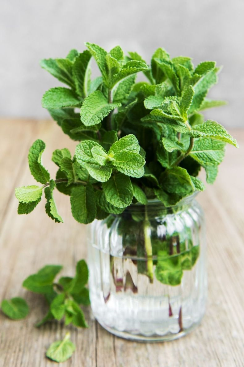 How to Store Fresh Mint Method 1-  Treat Mint Like Flowers