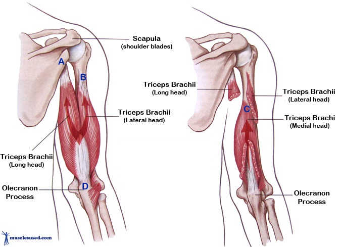 Triceps three heads