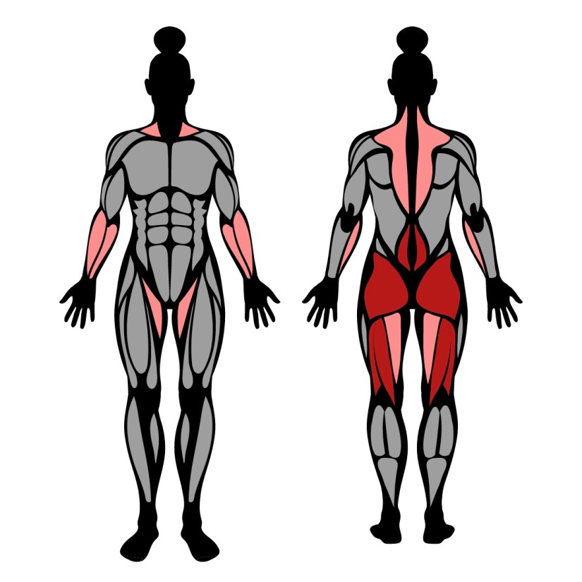 Muscles worked in romanian deadlift