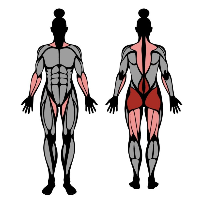 Muscles worked in the kettlebell swing exercise