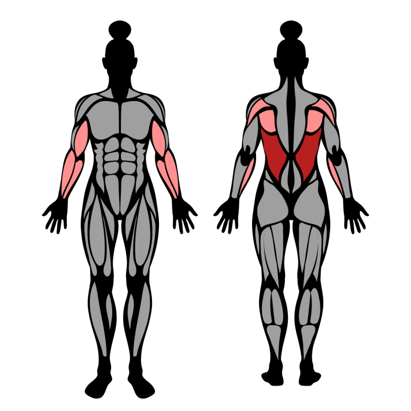 Muscles worked by Lat Pulldown With Supinated Grip