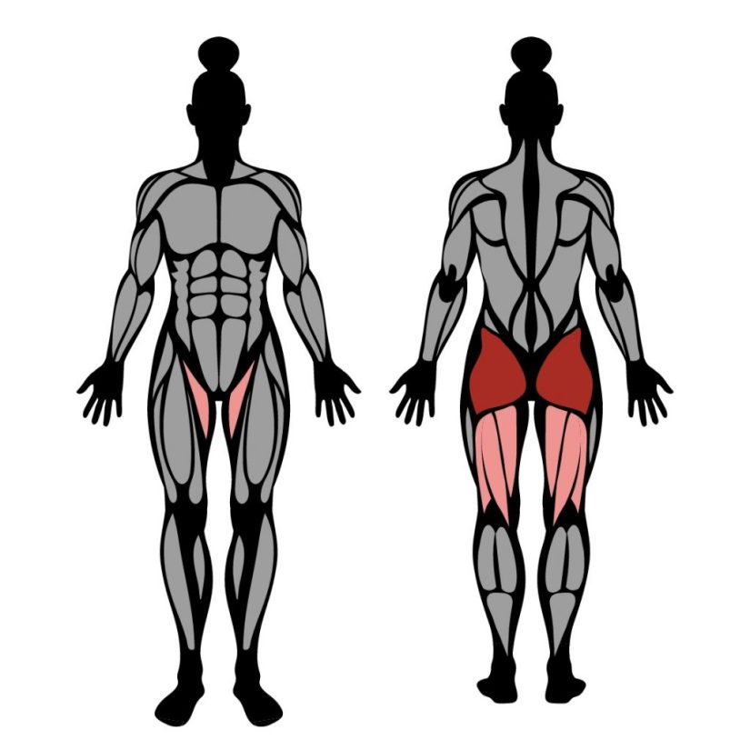 Muscles worked by barbell hip thrust exercise