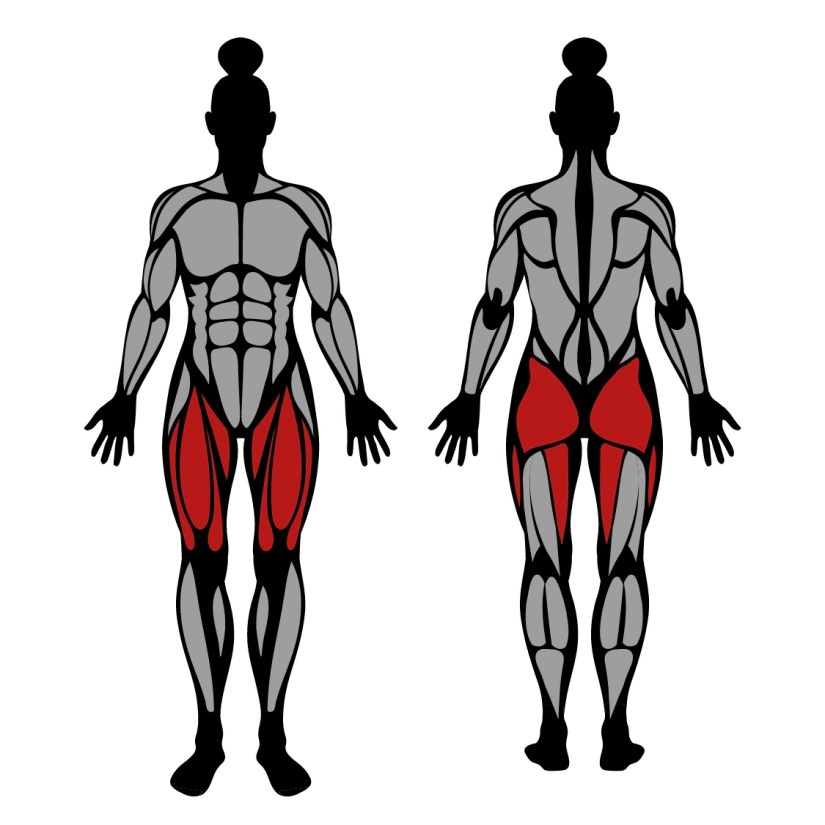 Muscles worked in bulgarian split squats