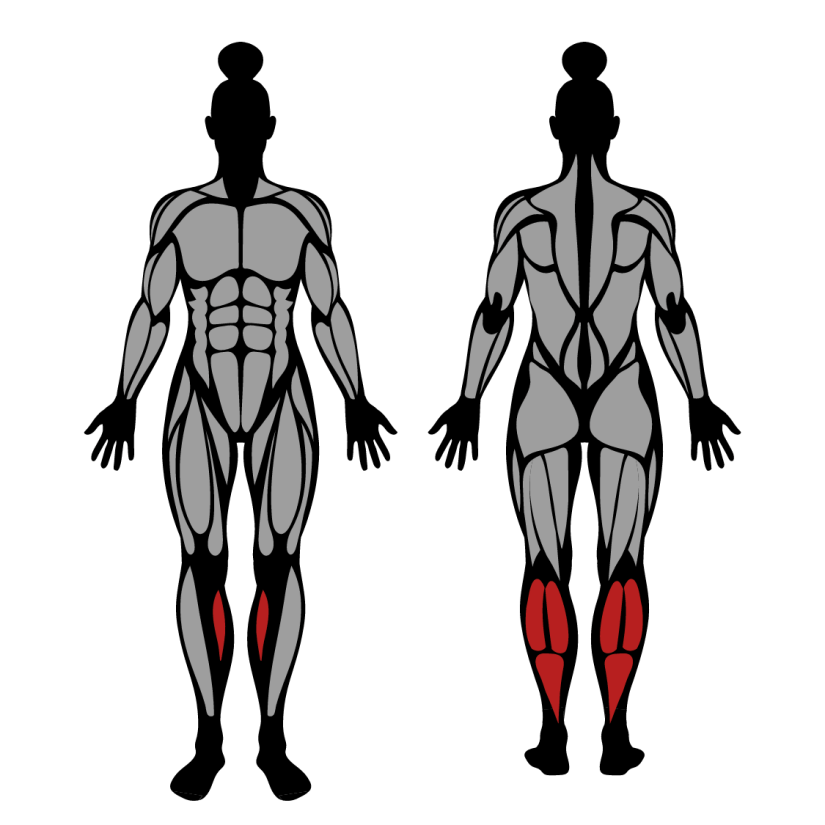 Muscles worked in Standing Calf Raises