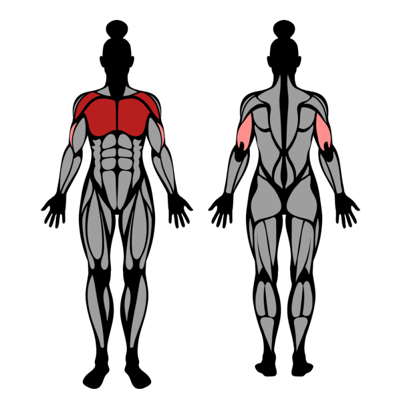 Muscles worked in the floor press exercise