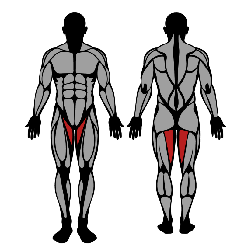 Muscles worked by hip adduction machine