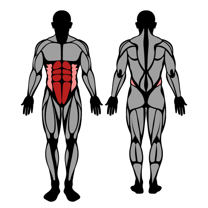 Muscles worked in the kneeling plank