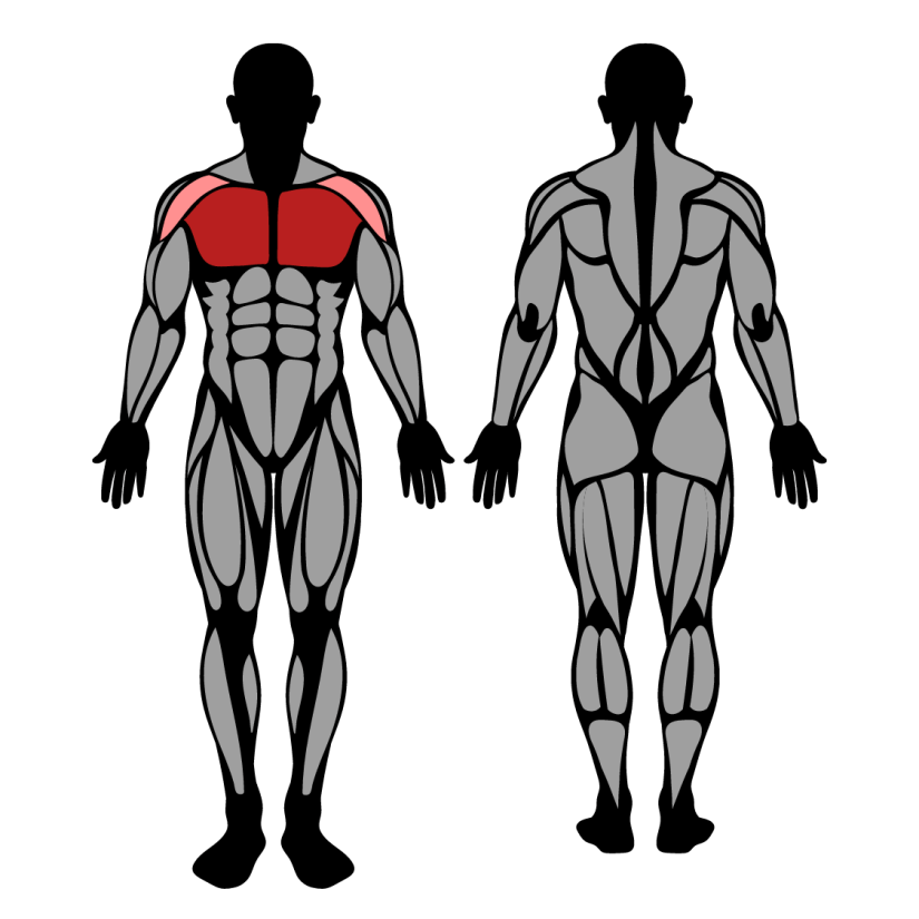 Muscles worked by machine chest fly