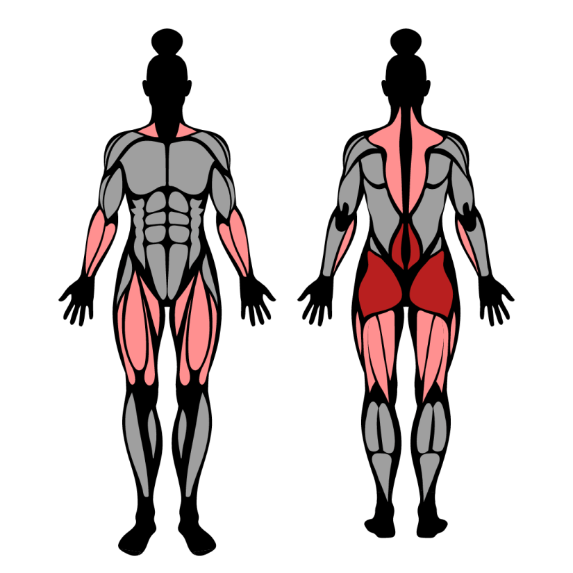 Muscles worked in sumo deadlifts