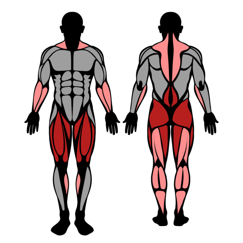 Muscles worked in the barbell snatch exercise