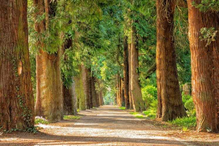 get back to nature avenue, trees, away