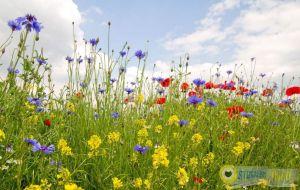 Zomaar-een-bloemenstraat-in-Strijen-Fotos-Marc-van-der-Stelt
