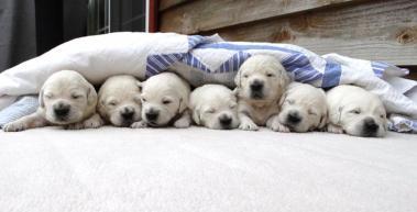 Clover/Monty Puppies