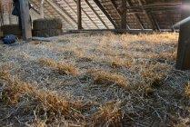 strawbalehouse-goggendorf-01-78