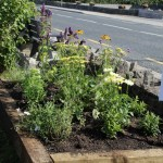 The Pollinator Friendly bed, funded by Local Agenda 21 Environment Partnership Fund, Roscommon County Council