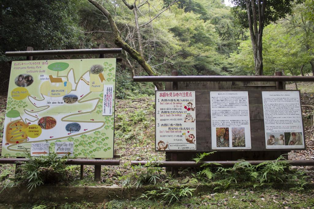 Arashiyama Monkey Park walk