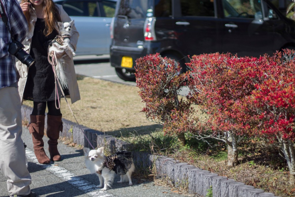 dressed up dogs Japan