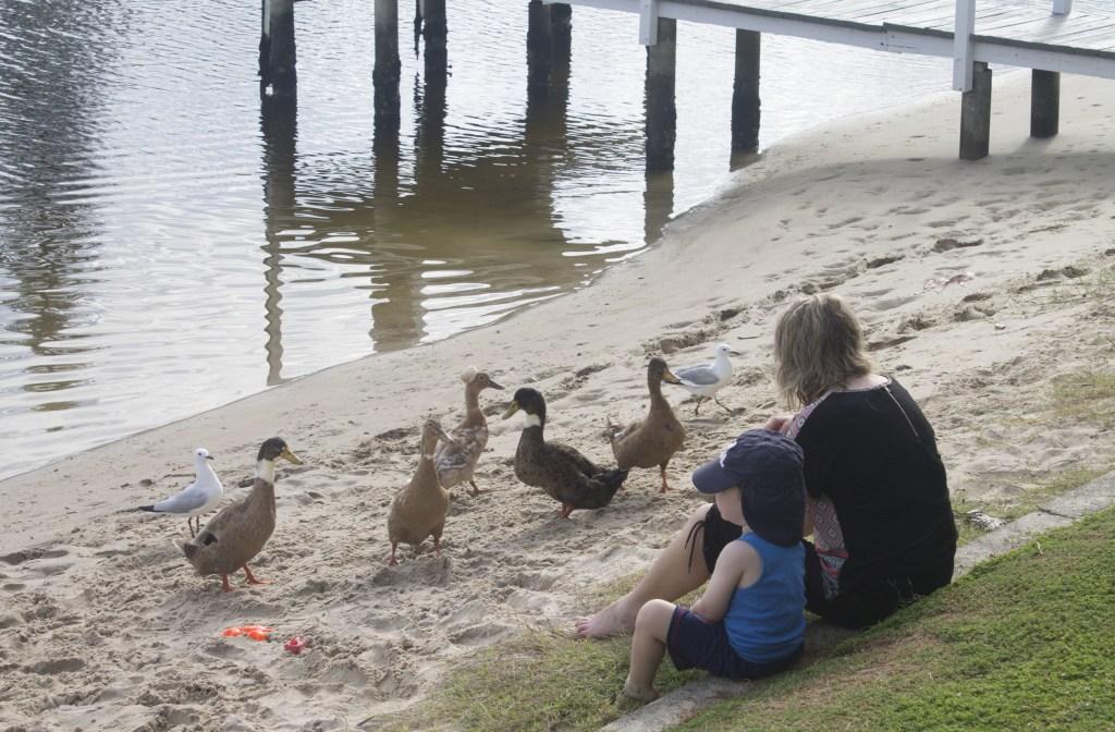 """Ducks on the 'beach"""""""