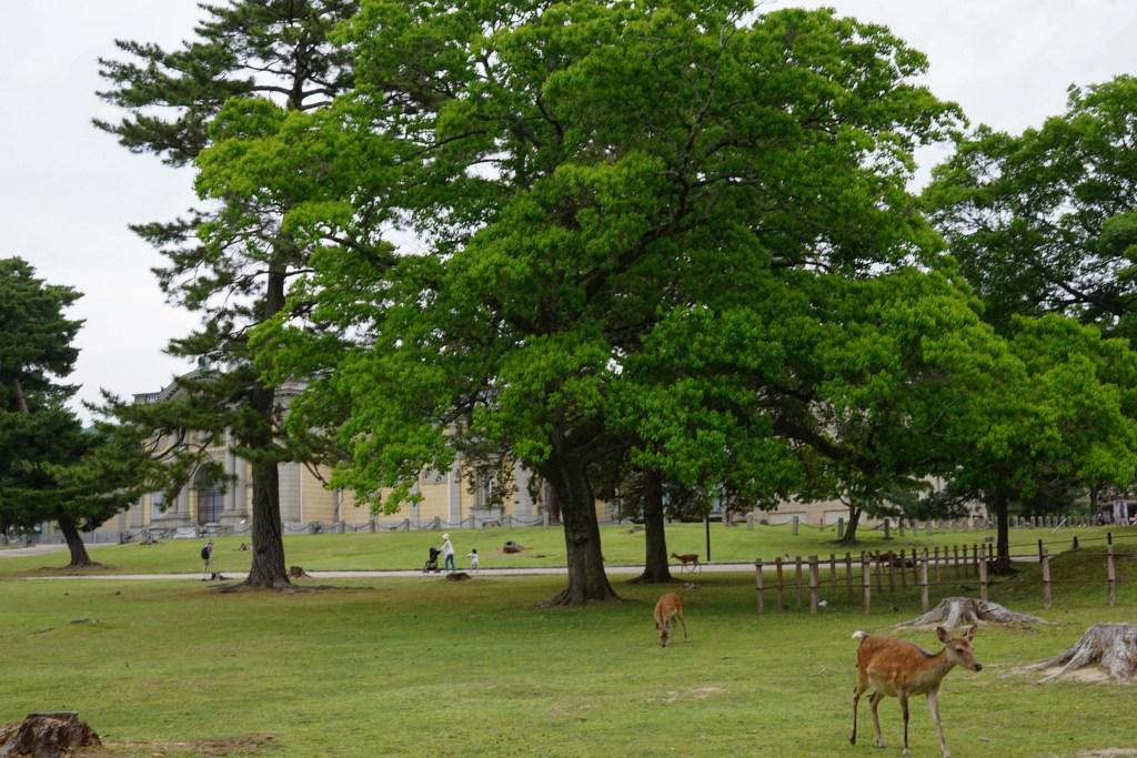 Day trip to Nara