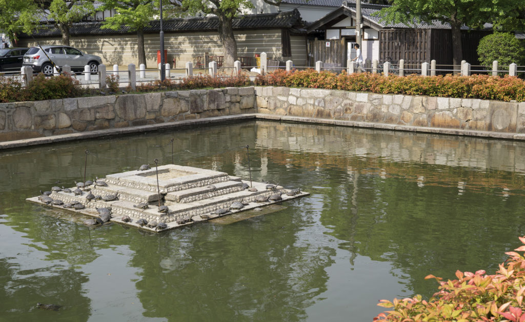 turtles in temple