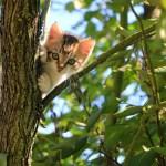 kitten in boom