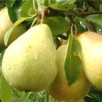 acaricide pomi fructiferi