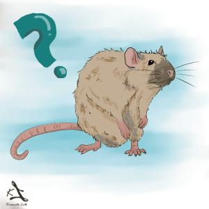 Szczur rat burmes dwa czy trzy szczury czy szczur może mieszkać sam grafika hodowla zarejestrowana z chaty strzygi rattery kiczowata lalka czy szczur może mieszkać sam czy można trzymać jednego szczura