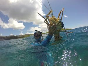 st thomas lobster hunt