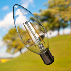 Light bulb in front of trees
