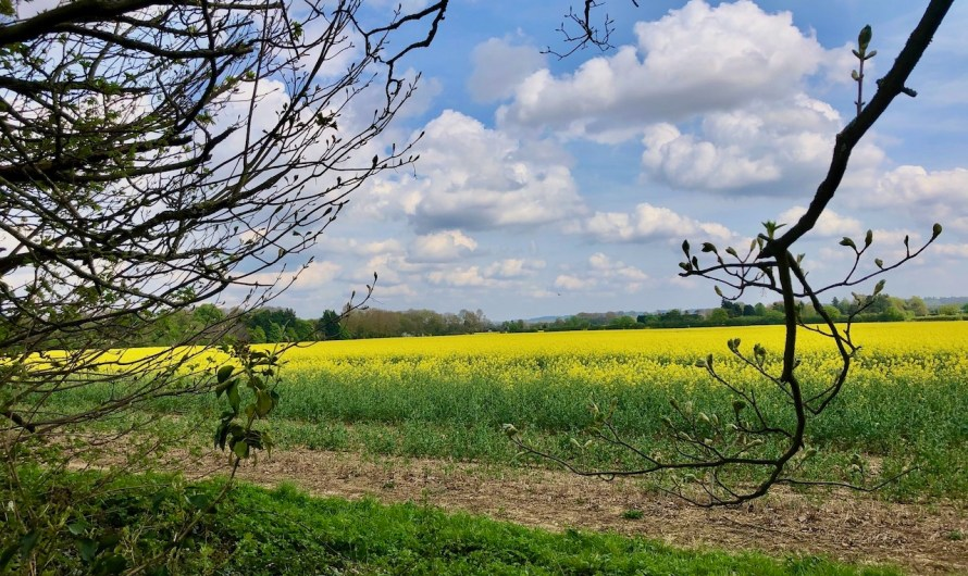 England's most picturesque countryside at risk of being spoilt by housing developments, warns campaign group!