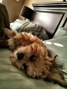 The Sweet Stuff: Izzy Update