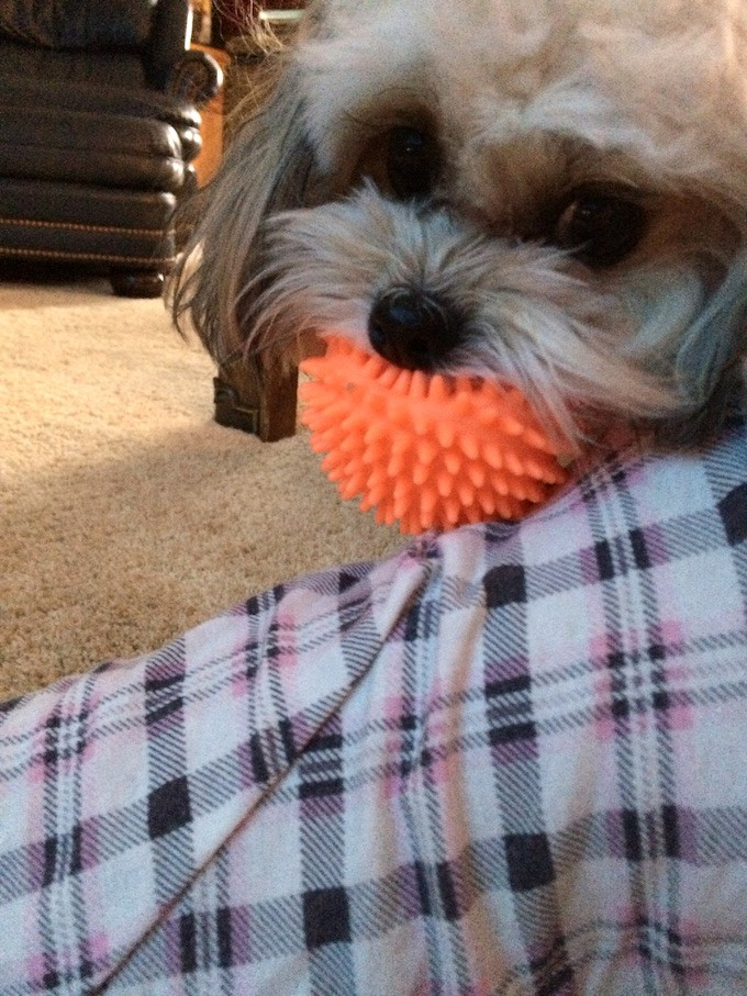 Izzy with Ball