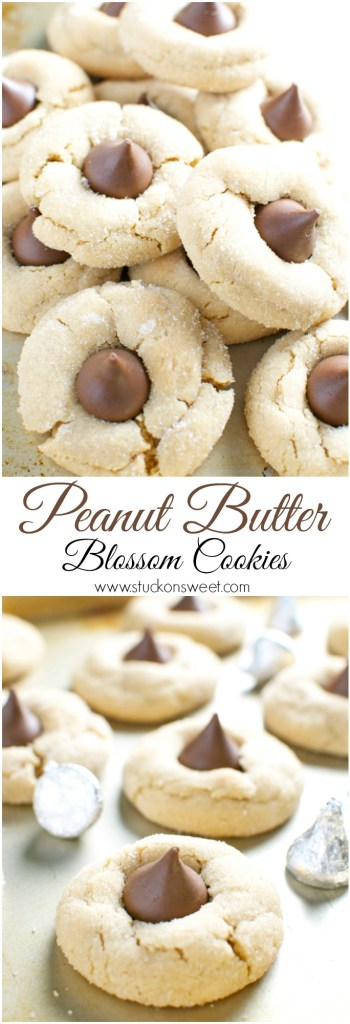 Peanut Butter Blossom Cookies are a classic cookie recipe. They are perfect for the holidays! #stuckonsweet #cookies #recipe #christmas