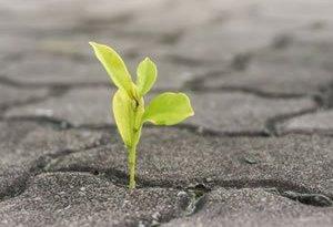 overcome adversity in professional school