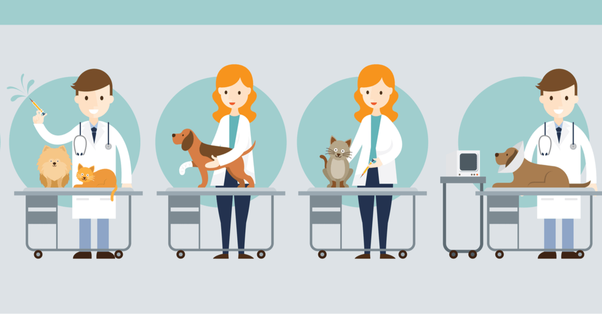 Veterinary Shadowing: How To Find And Make The Most Of
