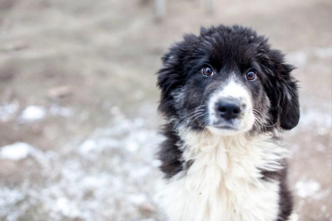 Tierschutz-Shop Spendenmarathon