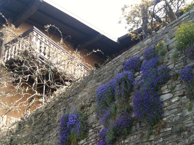 Elena_Bergamo_Passeggiata_StudentessaMatta1