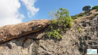 Auroville Bioregion