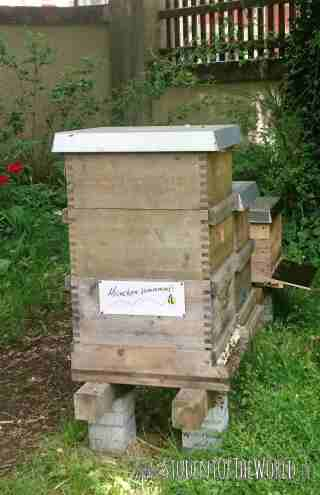 Bee Hive Munich