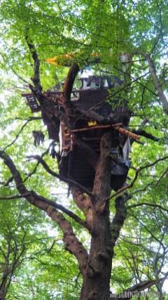 Wonderful Tree House