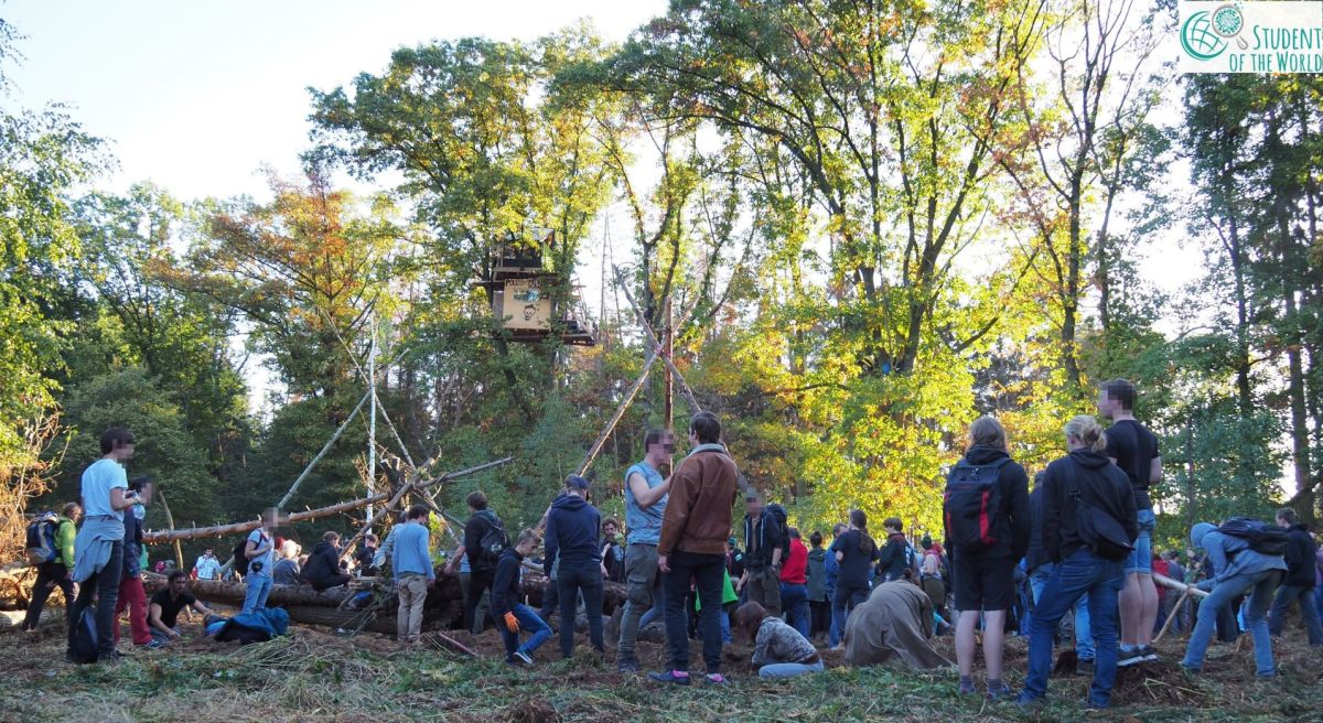 The Good News from Hambach Forest