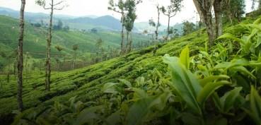 Coffee Estate Management system