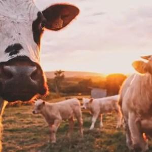 Milk Dairy Management System