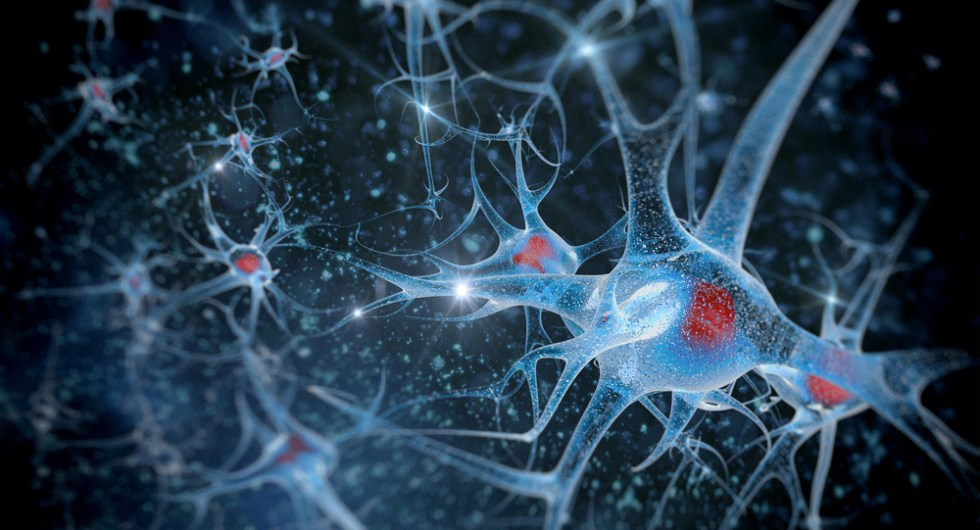 Image result for Neuron health