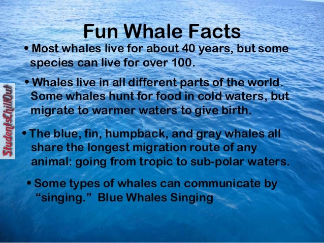 10 fun facts about dolphins