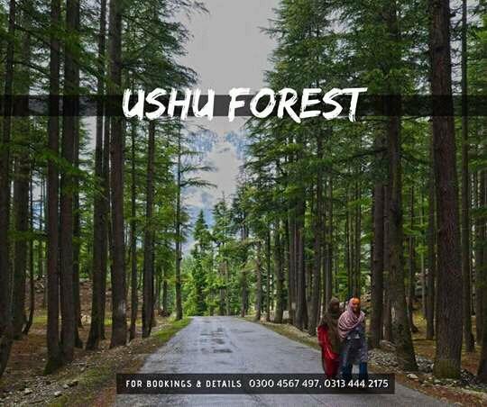 Ushu Forest