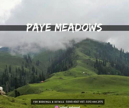 Payee Meadows