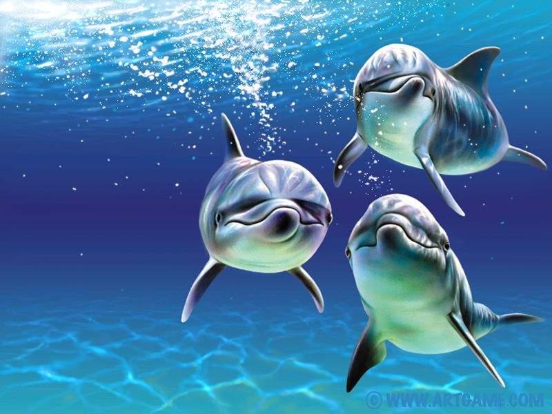 El Delfin Los delfines.. Animales -